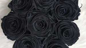 Черные и темные розы