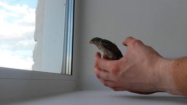 Что делать с птицей