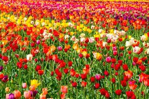 Что значит сон с цветочным полем