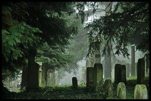 К чему снится кладбище женщинам