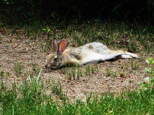 К чему снится раненный кролик