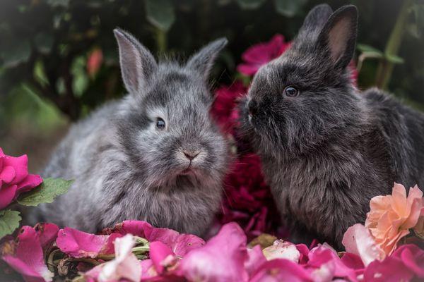 К чему снятся кролики