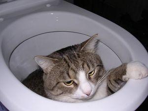 Кошачье говно