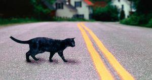 Кошка перешла дорогу
