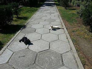 Кошки с разных сторон