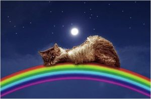 Куда попадают души кошек