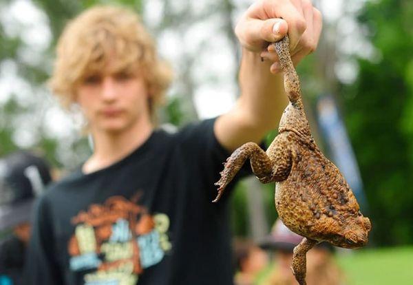 Лягушка в руках