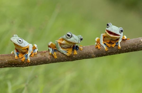 Маленькие лягушки