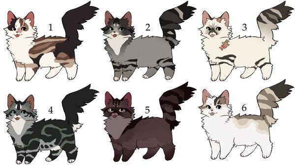 Окрас кошки