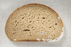 Плесневелый хлеб во сне