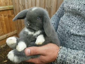 Приснился кролик мужчине или женщине