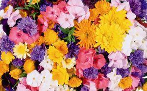 Разноцветные цветы во сне