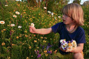 Рвать цветы во сне