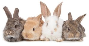 Толкование сна по цвету кролика