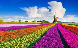 Толкование снов по цвету поля