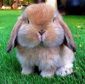 Толстый кролик во сне