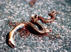 Убийство змеи во сне