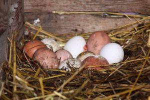 Яйца, запачканные куриным пометом во сне