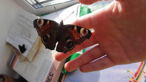 бабочка села на человека