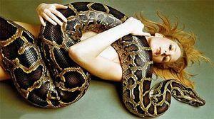 большая змея во сне к чему снится женщине