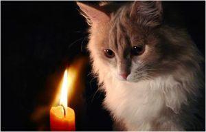 гадать Будущее по кошке