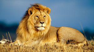 грациозный лев