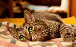 игривая кошка во сне