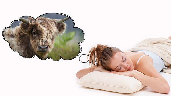 к чему снится бык