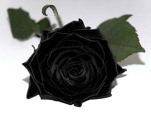 к чему снятся Черные цветы