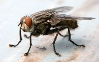 к чему снятся мухи