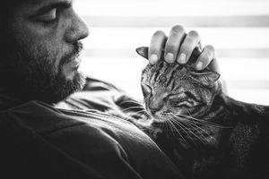 кошка снится мужчине