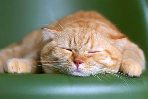 кошка во сне к чему снится