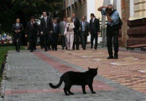 кот перебежал дорогу