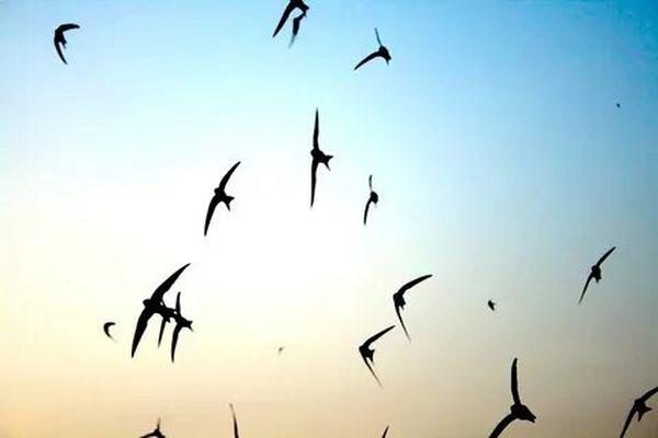 ласточки в небе
