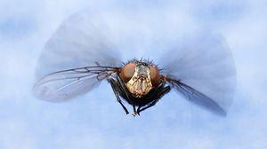 летающие мухи