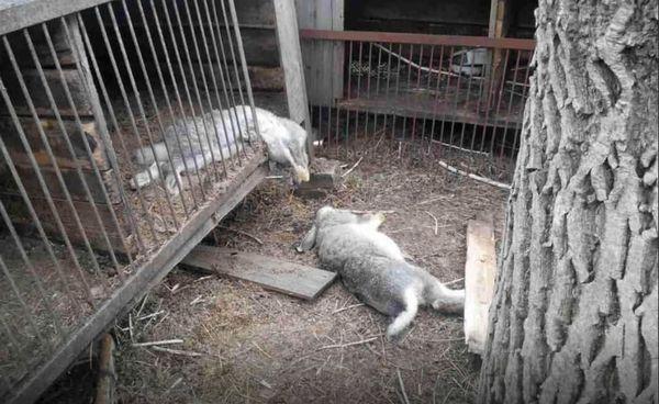 мертвые кролики