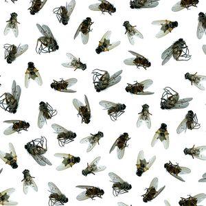 много мух