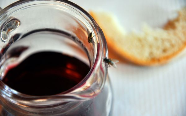 муха и чай