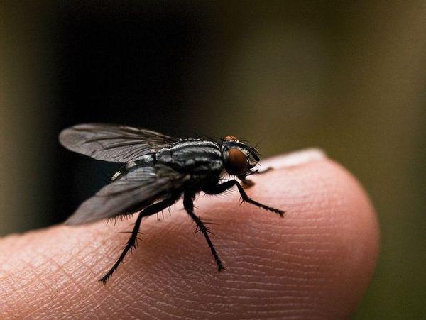 муха на пальце