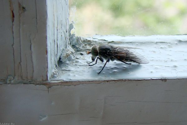 муха у окна