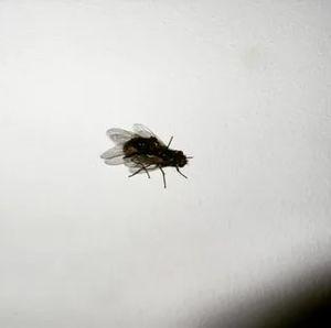 мухи на потолке