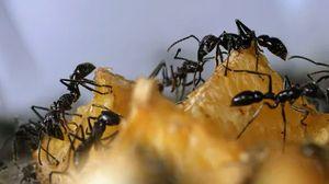 муравьи во сне мужчине