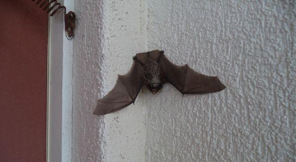 мышь на балконе