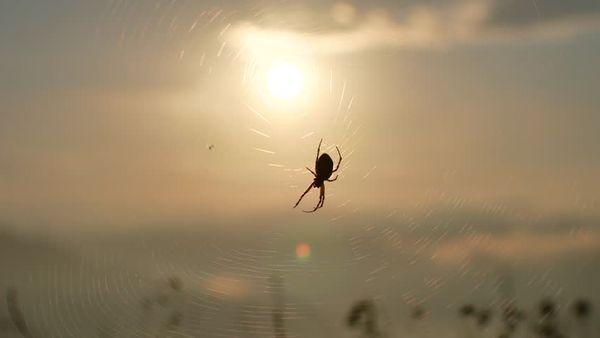 паук на улице