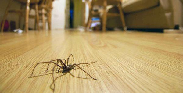 паук спустился с потолка