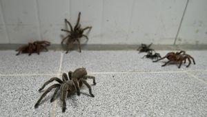 пауки в доме снятся