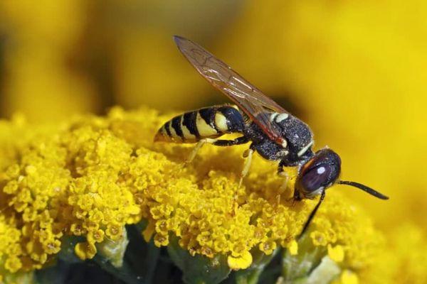 пчела на цветку