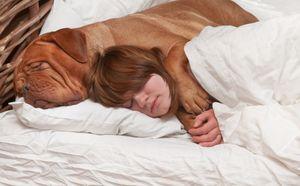 потерять собаку во сне