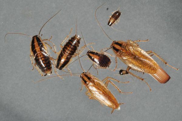 появились тараканы