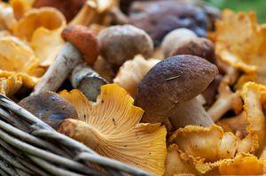 разные грибы снятся
